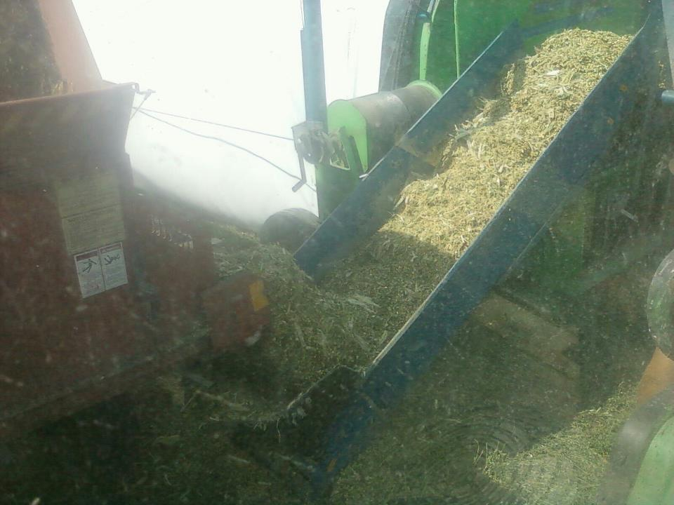 Better corn silage is possible